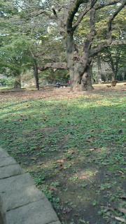 151022.代々木公園-3.jpg