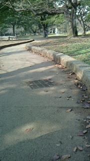 151022.代々木公園-4.jpg