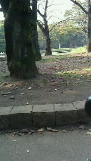 151022.代々木公園-5.jpg