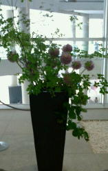 エアライズの花-160720.jpg