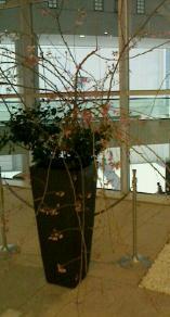 枝垂桜-130328.jpg