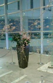 枝垂桜-160330.jpg