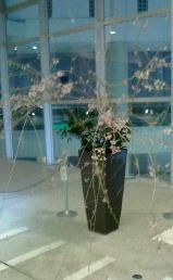 枝垂桜-160331.jpg