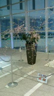 枝垂桜-160401-1.jpg