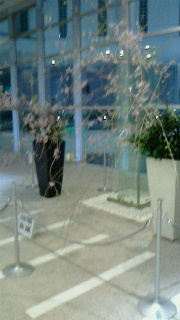 枝垂桜-160401-2.jpg