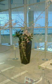 枝垂桜-160402-1.jpg