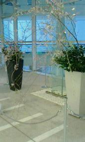 枝垂桜-160402-2.jpg