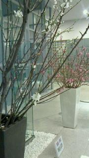 桃、4種-2.jpg