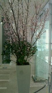 桜-1-160324.jpg
