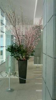 桜-2-160324.jpg