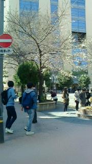 桜-3-160324.jpg
