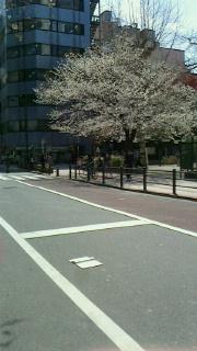 桜-4-160324.jpg