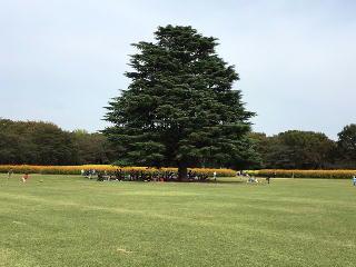 IMG_0599-昭和記念公園-4-コスモスと大木-2016.jpg