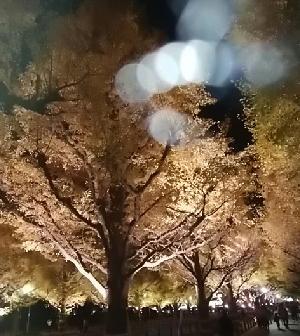 外苑前銀杏並木ライトアップ-181127-4.jpg
