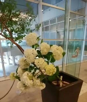 紫陽花とナツハゼ-180628-2-.jpg